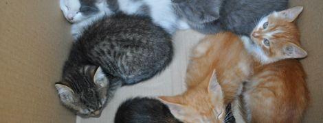 Робота мрії: у столичному зоопарку запрошують обійняти незвичну вакансію пестувальника котів