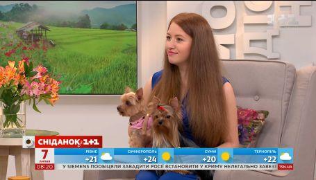 Власниця йоркширських тер'єрів розповіла усе про догляд за собаками