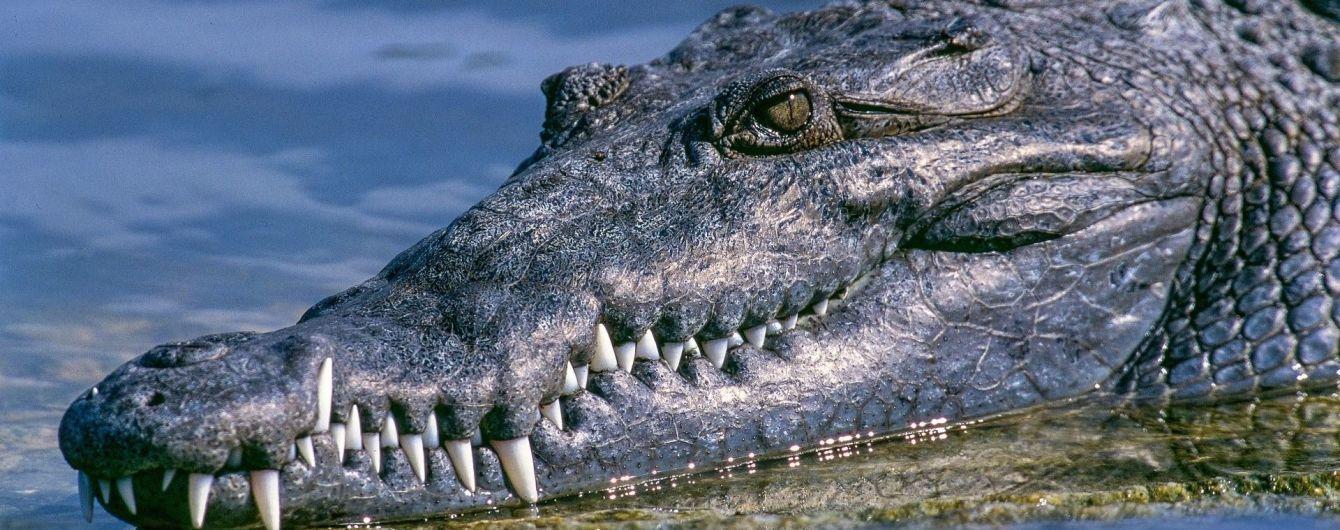 В США аллигатор съел пилота, который попал в авиакатастрофу