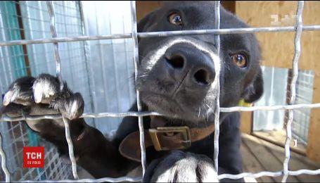 Полювання на догхантерів і порятунок тварин: в Україні з'явились зоодетективи