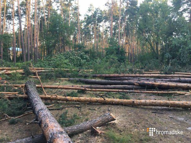 На Оболоні сталася стрілянина через вирубку лісу