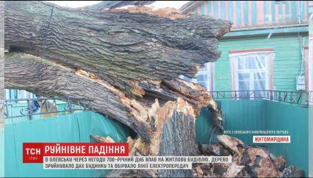 700-летний дуб упал на жилой дом из-за урагана в Житомирской области