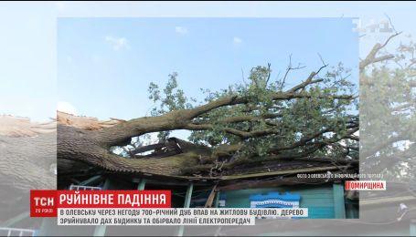В Олевске крышу жилого дома разрушил 700-летний дуб