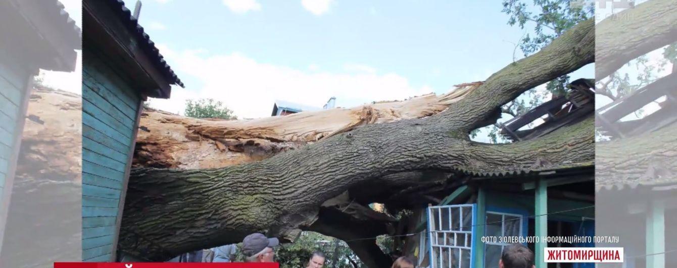 На Житомирщині буревій завалив на житловий будинок 700-річний дуб