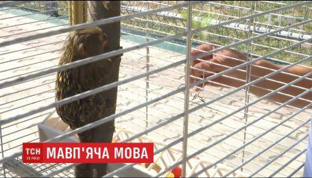 До Вінницького зоопарку привезли чотирьох найменших у світі карликових мавпочок