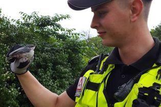 В Риге полиция наняла воробья младшим инспектором