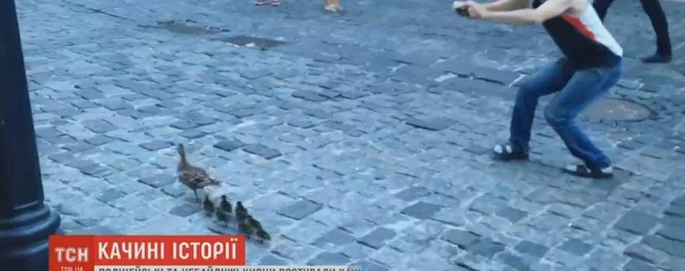 На Андреевском спуске провели спецоперацию по спасению утки с птенцами