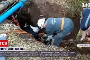 Новини України: у Кривому Розі з підземелля рятували корову