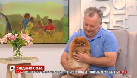 Власник померанських шпіців розповів, як доглядати за собакою цієї породи