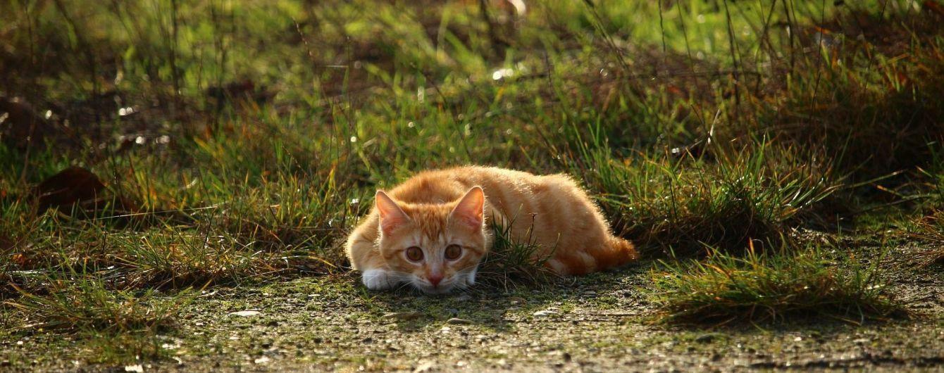 Американець загримів за ґрати на 16 років за вбивство 21 кішки