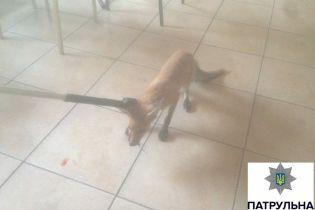 В Мариуполе бешеная лисица бросалась на отдыхающих на пляже