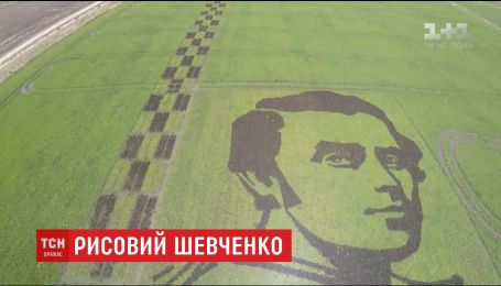 """На Херсонщині з чорного рису """"виростили"""" гігантський портрет Шевченка"""