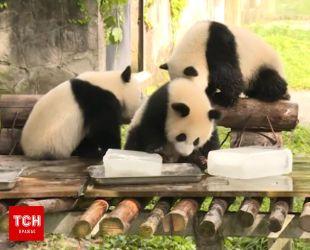 Працівники китайського зоопарку допомогають тваринам пережити неймовірну спеку