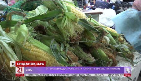 В Україні розпочався сезон кукурудзи