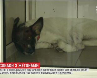 У Дніпрі власників собак зобов'язали начепити жетони з інформацією на чотирилапих