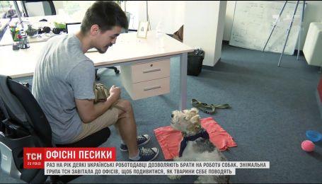Офисный любимец: украинские компании раз в год позволили сотрудникам взять на работу собак
