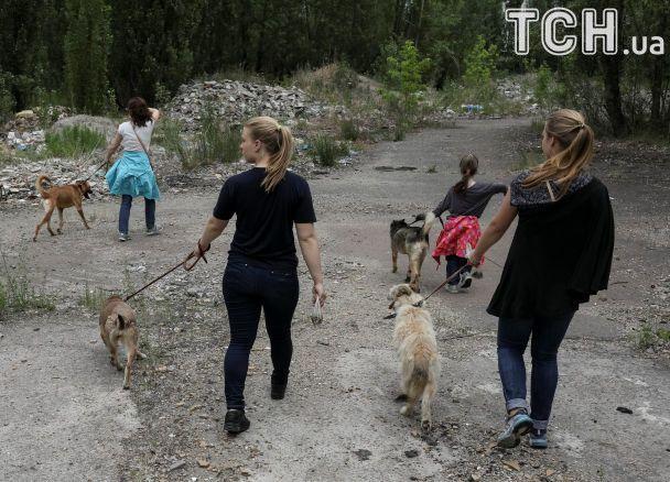 Печаль в глазах и жажда к играм: Reuters показало, как проводят уикенд бездомные собаки под Киевом