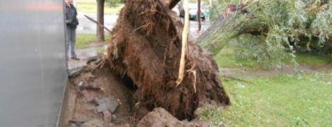 Польшу атаковали ураганы: поваленные деревья и подтопленые дома