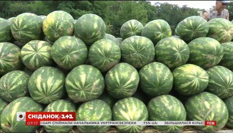 Чи безпечно їсти кавуни, які нині активно купують українці