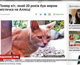 Умер кот, который был мэром на Аляске