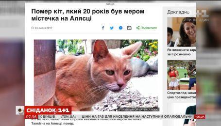 Помер кіт, який був мером на Алясці