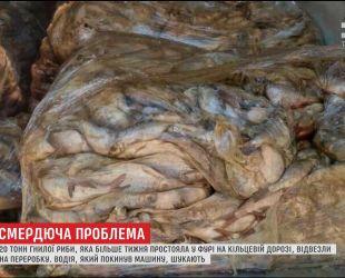 Із запашком: на околиці Києва знайшли фуру з 20 тоннами гнилої риби
