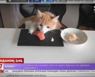 Известный шеф-повар из Японии рассказал, как удовлетворить вкусы своих котов