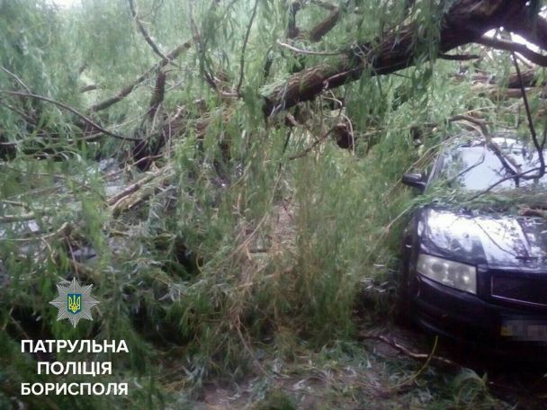 Зірвані дроти, повалені дерева і побиті машини: поліція показала наслідки негоди у Борисполі