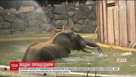 Чтобы слоны легче переносили жару, в зоопарке Вены построили специальный бассейн