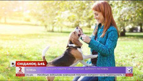 Петр Порошенко подписал закон «О гуманном отношении к животным»