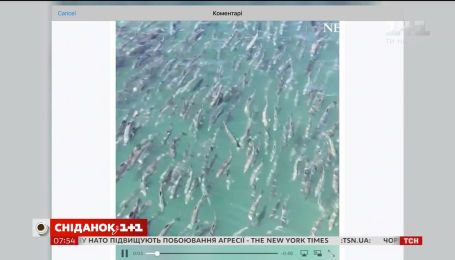 ABC виклав відео з сотнями риб лосося в одному кадрі