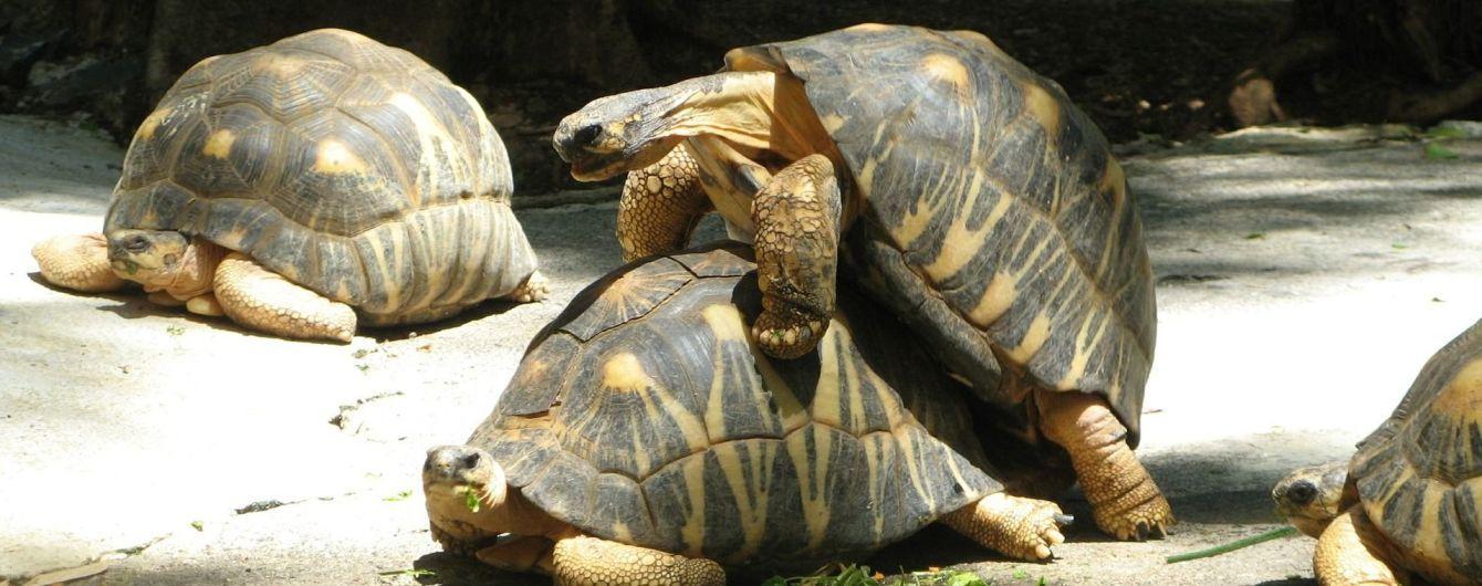 Тотальный хаос: туристы не могли вовремя покинуть греческий остров из-за спаривания черепах