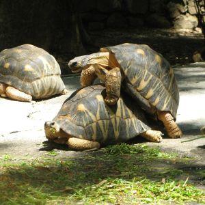 Мужская любовь: ветеринары выяснили, почему в самой старой черепахи в мире нет потомства