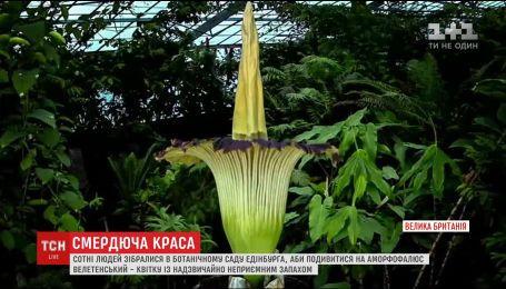 Сотні людей зібралися в ботанічному саду Единбурга подивитись на велетенську смердючу квітку