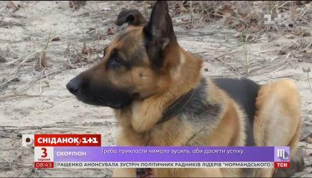 Неймовірні історії про порятунок людей домашніми тваринами