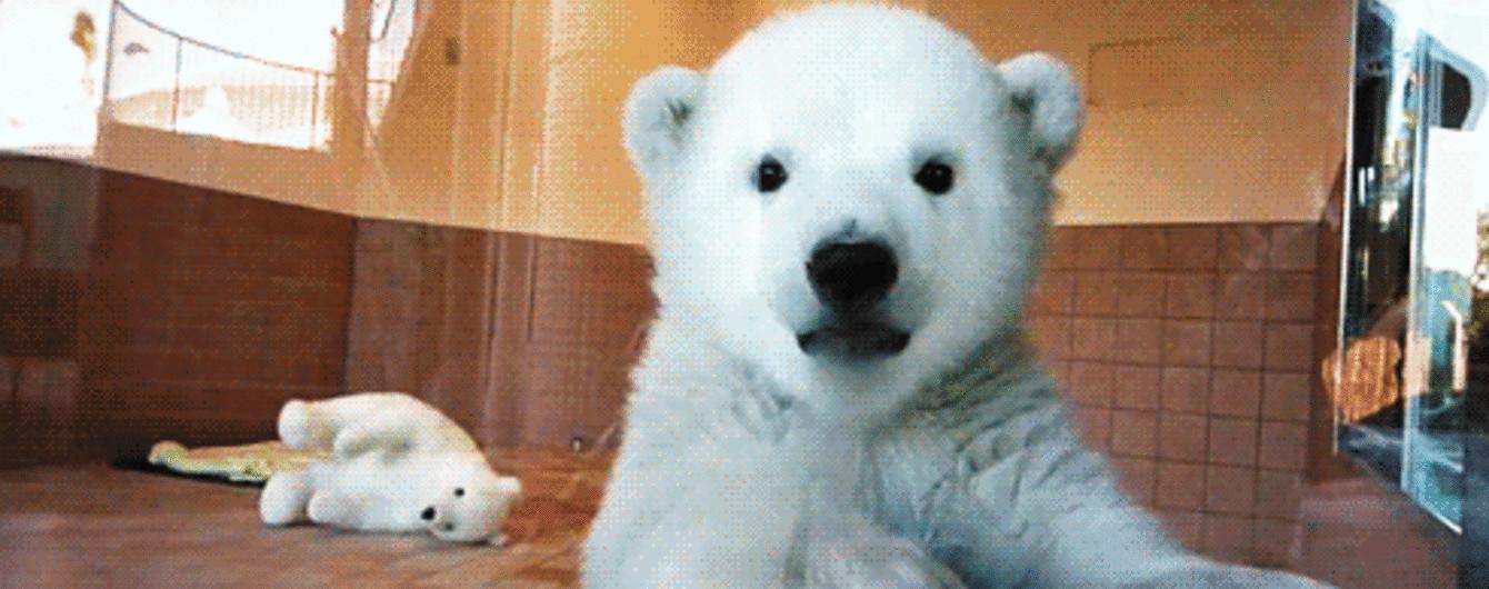 Відео перших днів полярного ведмедика і полісмени, які роздають морозиво у спеку. Тренди Мережі