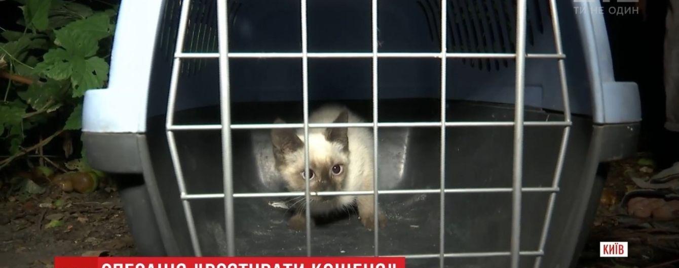 В Киеве спасение дворового кота превратилось в спецоперацию