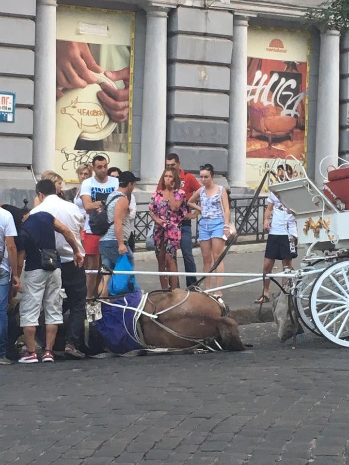 кінь зомлів в Одесі