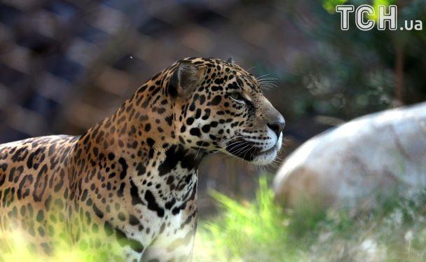 Веселі ігри тигрів у воді та фотогенічна жаба: Reuters показало, як живуть тварини у зоопарку в США