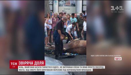 В Одессе конь, который катал туристов, не выдержал жары и упал прямо посреди города