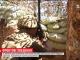 Боевики не прекращают обстрелы украинских позиций в зоне АТО
