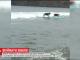У Каліфорнії влаштували чемпіонат із серфінгу для собак