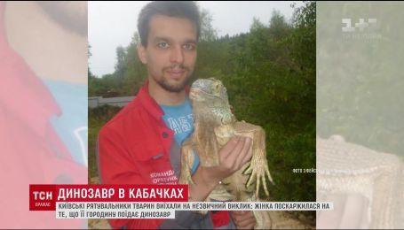 """На Киевщине появился """"динозавр"""", который поедал кабачки на сельском огороде"""