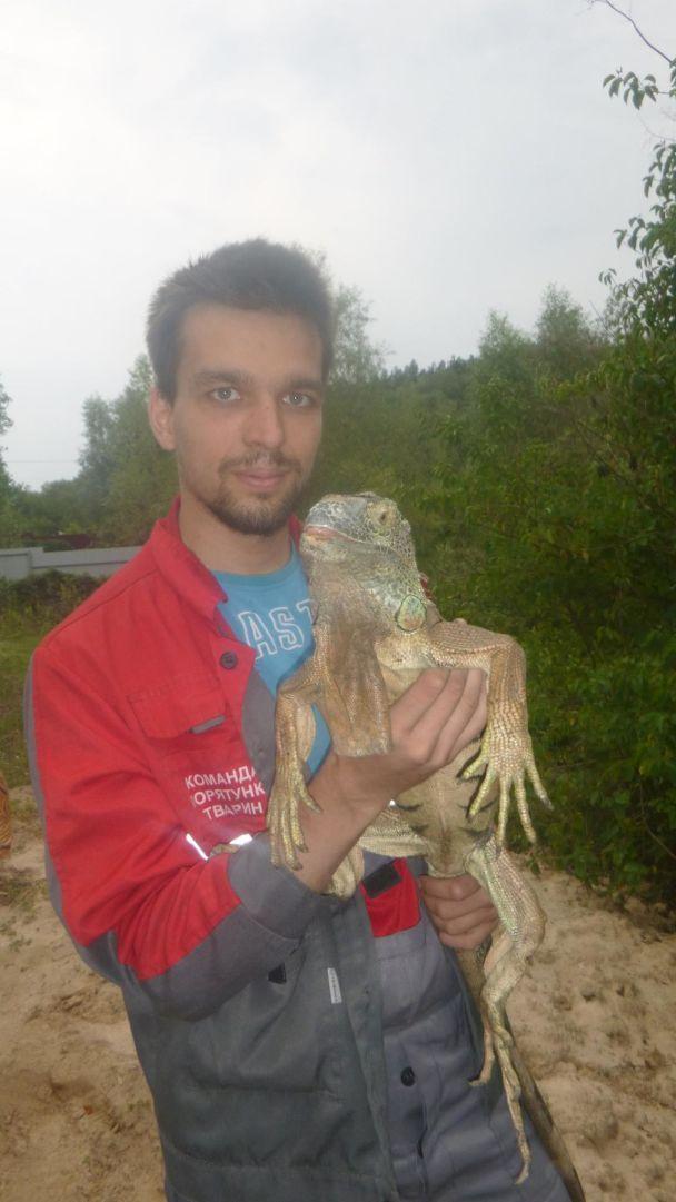 """На Киевщине спасли метрового """"динозавра"""", который пожирал урожаи кабачков"""