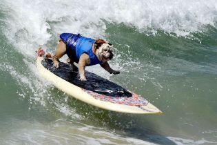 Собаки на хвилях. У Каліфорнії влаштували кумедні змагання з серфінгу для тварин