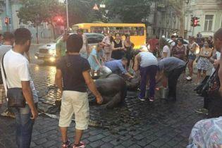 В Одессе полиция открыла дело из-за упавшего в обморок посреди улицы коня