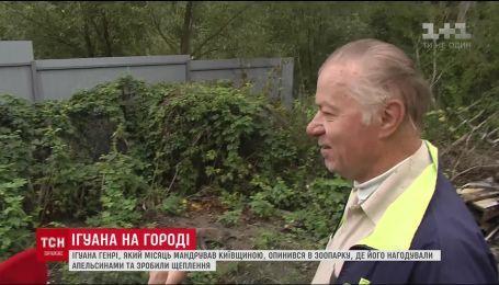 На даче киевских пенсионеров неизвестное им животное регулярно поедало урожай