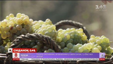 Мій путівник. Коблеве - секрети народження українського вина