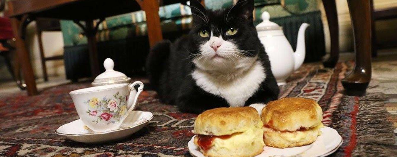 В Международный день кошек британские дипломаты рассказали о рабочих буднях своего мышелова
