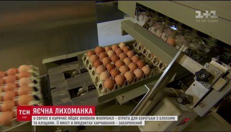 В Европе в куриных яйцах обнаружили яд для борьбы с блохами и клещами